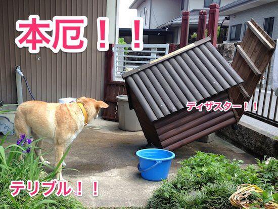 Honyaku