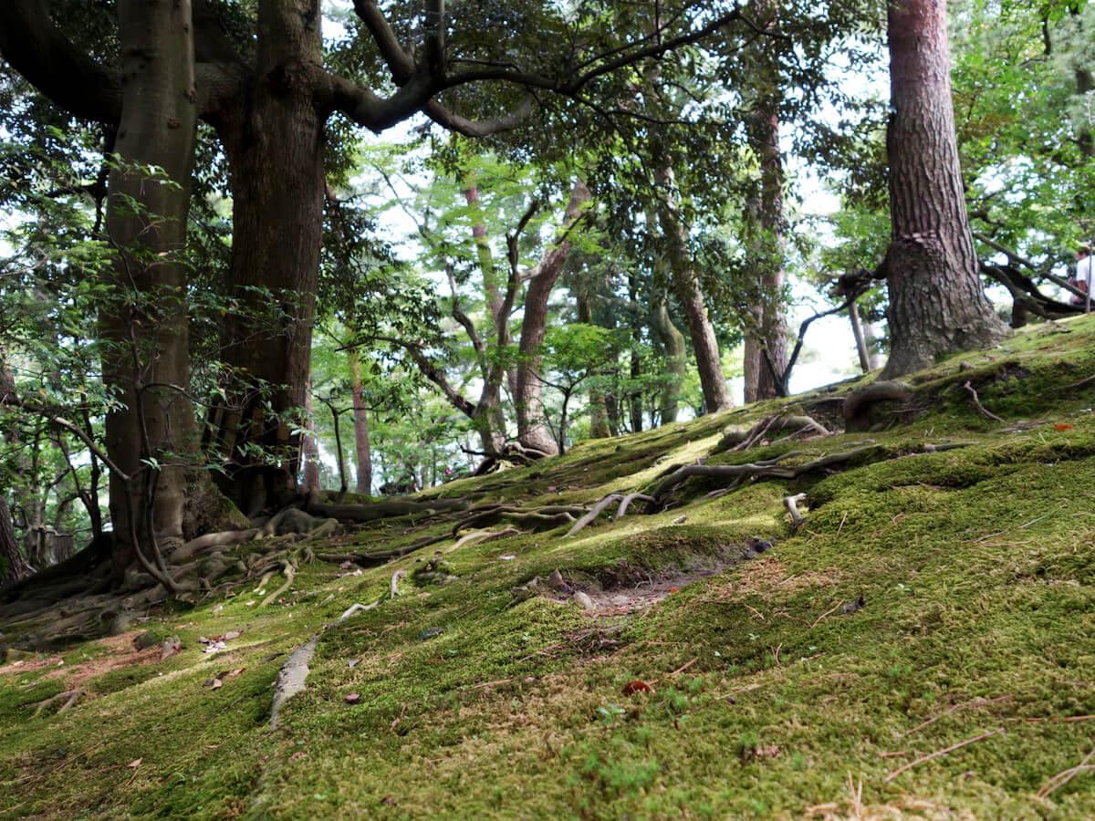 石川県で開催されるキャンプ型ハッカソン「里山で創るエデュテックトイ」に参加します
